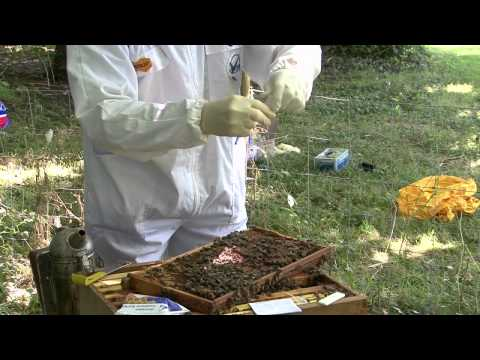 How to use Vita Diagnostic Test Kits for American & European Foulbrood
