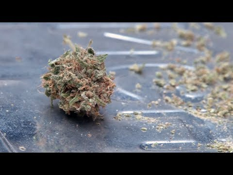 Highlights from HIGH TIMES Cannabis Cup Amsterdam 2013: Day One