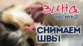 Кошка Зина. Снятие швов кошке.