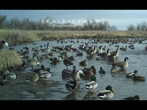 Nebraska Waterfowl Hunting Land For Sale | Prairie Swamp 2018/2019-1 | Lewellen, NE