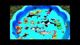 Учим Цвета и Название Морских Животных Рибки Акула Краб Осьминог Игрушки Для Малышей Детское Видео
