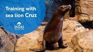 Training with Sea Lion Cruz