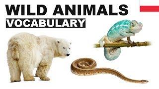 Angielskie słówka w obrazkach - Dzikie zwierzęta 2 (Wild animals)