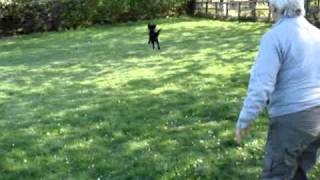 Jimbo Springer Cross Cocker Spaniel Needs A Home - Rspca Macclesfield.mpg