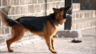 Ultrasonic and audible sound to quiet your neighbor's barking dog - 3 hours