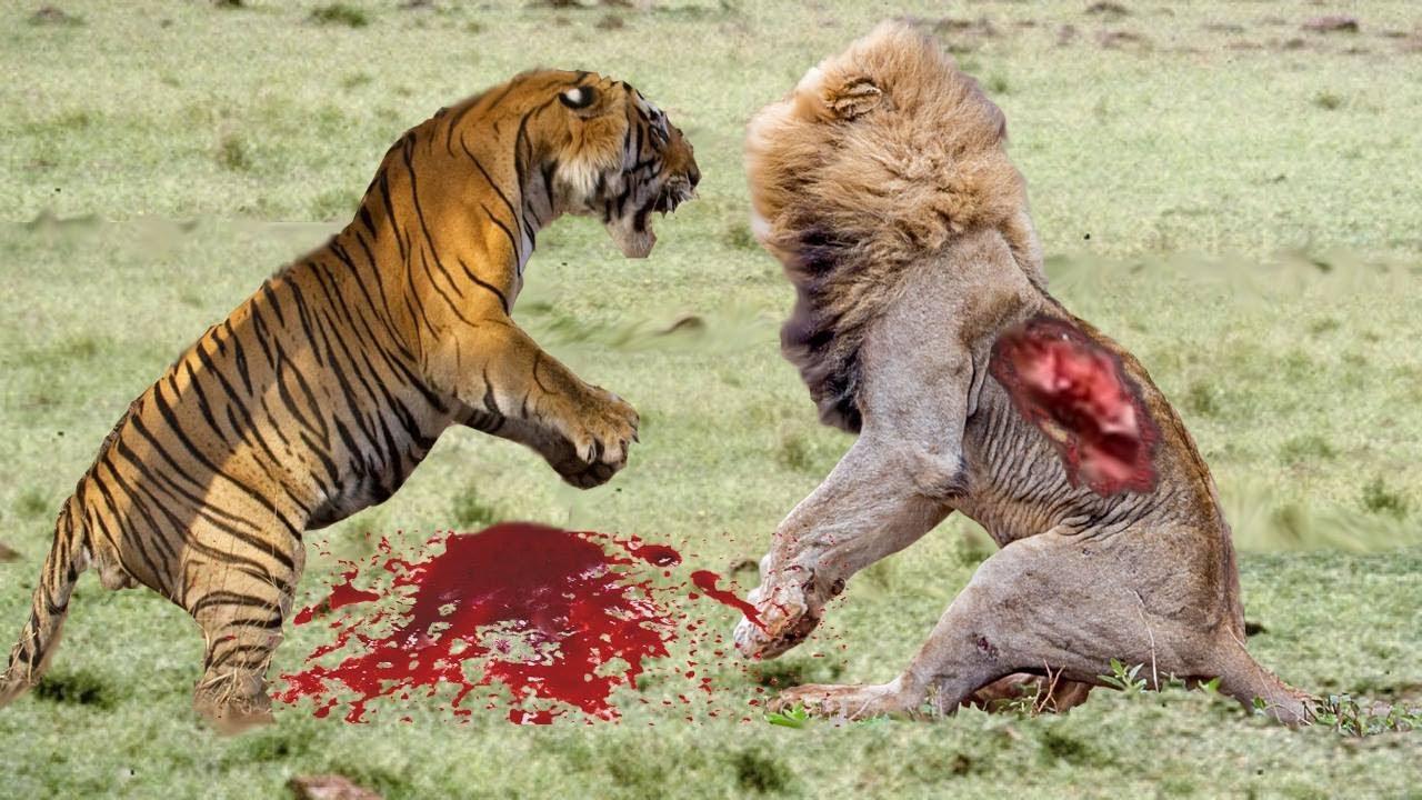 [Leon vs Tigre]   Serpiente vs Tigre vs Piton - YouTube