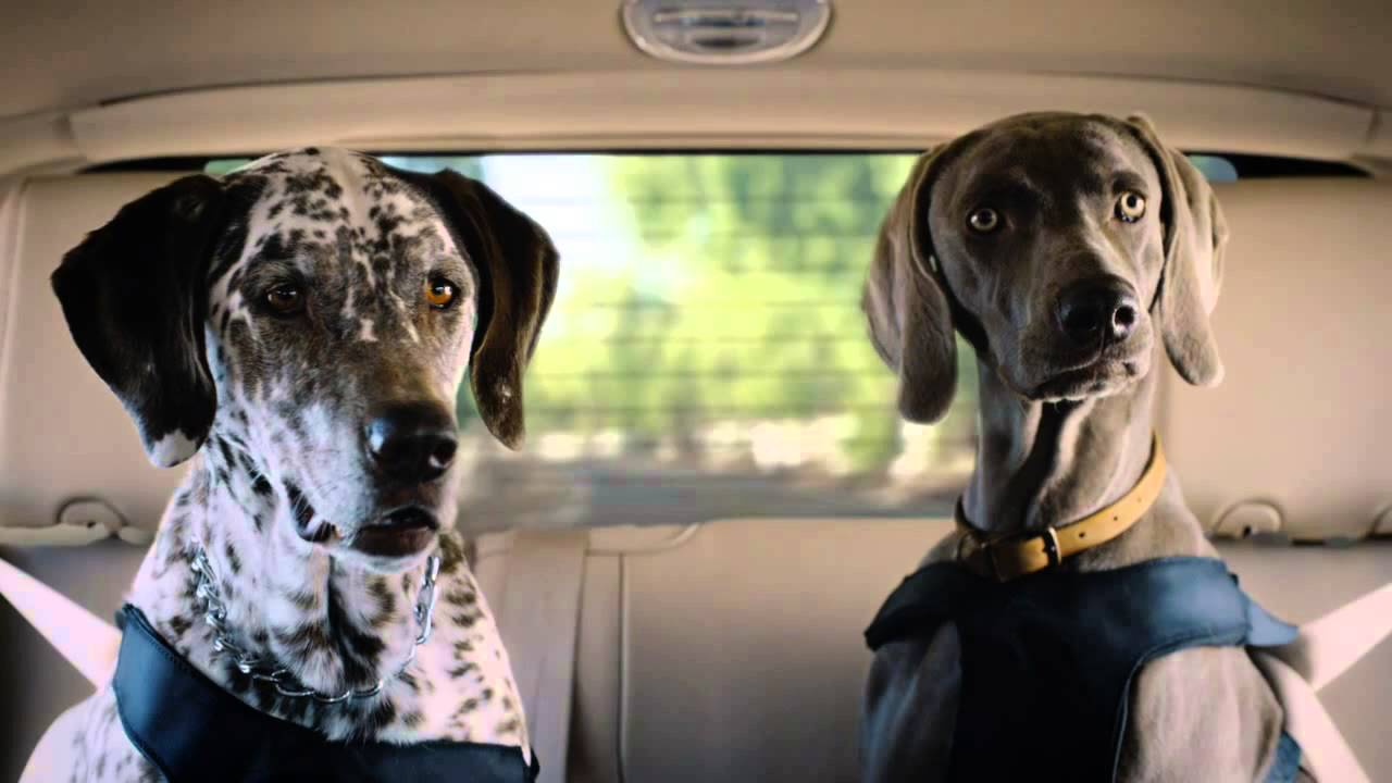 Lincoln Navigator Mcconaughey Dog Youtube