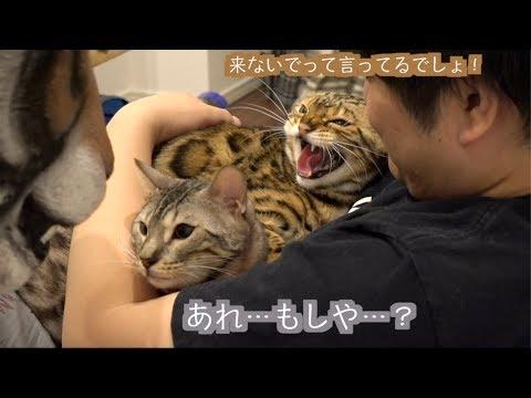 猫たちのトラウマ!!ボス・タイガー再び!!