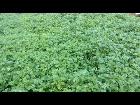 106.Плодородную землю делаем с осени