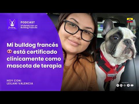 Hoy con Leilani Valencia: Mi bulldog francés 🐽 está certificado clínicamente como mascota de terapia