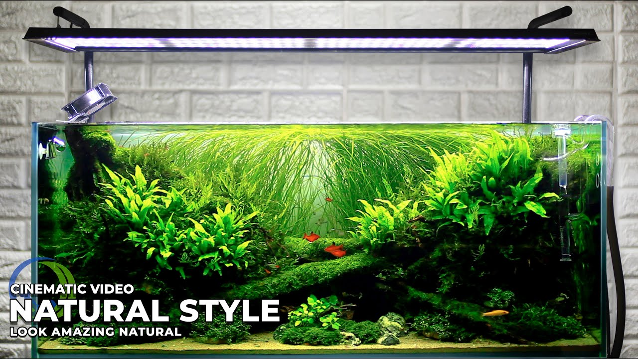 STUNNING NATURAL STYLE AQUASCAPE || AFTER 5 MONTH