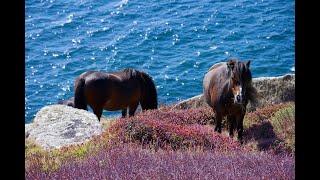 South West Coast Path - From Logan Rock to Lamorna Cove, Cornwall 2020