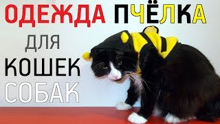 Одежда для кошек и собак Пчёлка с AliExpress Обзор Цена Купить