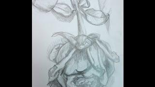 pencil drawing half dead Rose flower