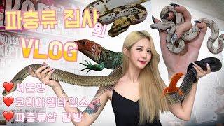 브이로그 한국최대 파충류쇼 다녀왔습니다