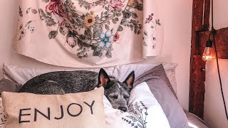 Day in my Life with my Australian Cattle Dog