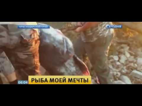 Рыба мечты: житель Кубани поймал 100-килограммового сома