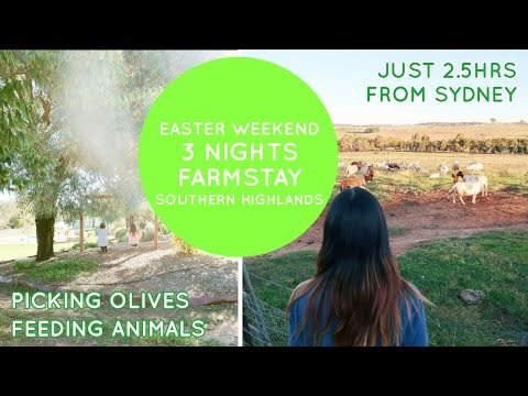 3 Nights On A Farm - 2.5 Hours From Sydney - Australian Farmstay ♥ ♥ I Fed An Alpaca!