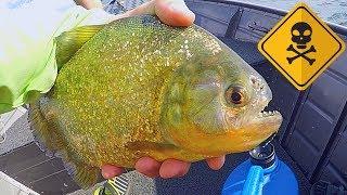 catch-n-cook-golden-piranha