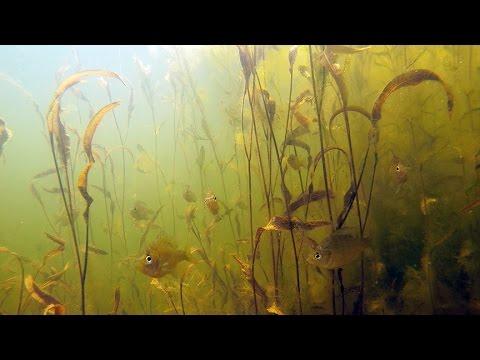 Pond Management-Habitat Enhancement