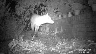 Hillside Wildlife Watch 32