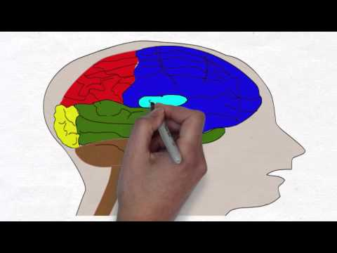 cortisol and hippocampus