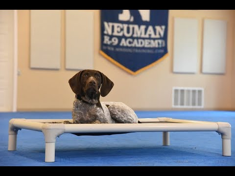 Winston (German Shorthair Pointer) Puppy Camp Dog Training Video Demonstration