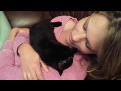 Cute kitten cuddle