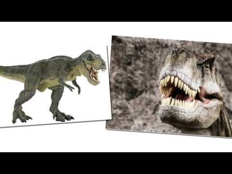 Tyrannosaurus Rex - Interesting Facts