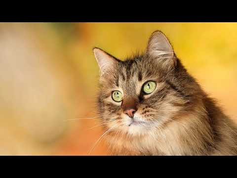 Как отучить ребенка мучить кота, кошку, животных?