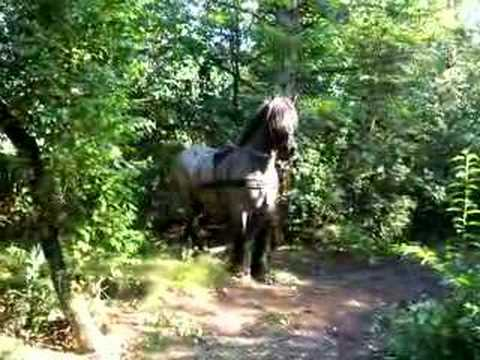 Forestry with a heavy horse 2, the tools of the trade