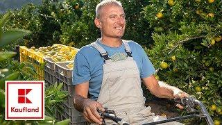 Naše mi najbolje paše | Sočne mandarine iz doline Neretve | Kaufland Hrvatska