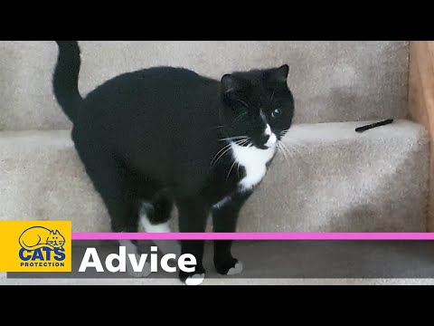 Purrfectly Imperfect | Caring for a blind cat