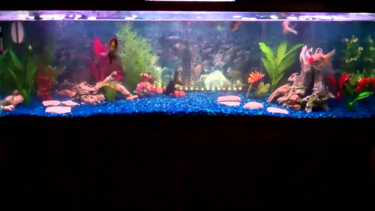 100 gallon gold fish tank youtube for Fish tank youtube