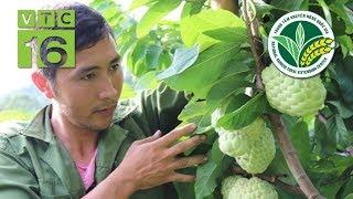 Làm giàu từ trồng cây na: 1 vốn 4 lời | VTC16