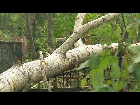 На фото На Шараповском кладбище начинают ликвидацию последствий урагана изображение