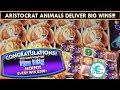 *BIG WINS!* Aristocrat Slot Machines: Sunset King, Miss Kitty Wonder 4, Buffalo Stampede