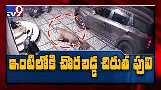 Caught on camera : Leopard enters home to hunt pet dog in Tamil Nadu - TV9