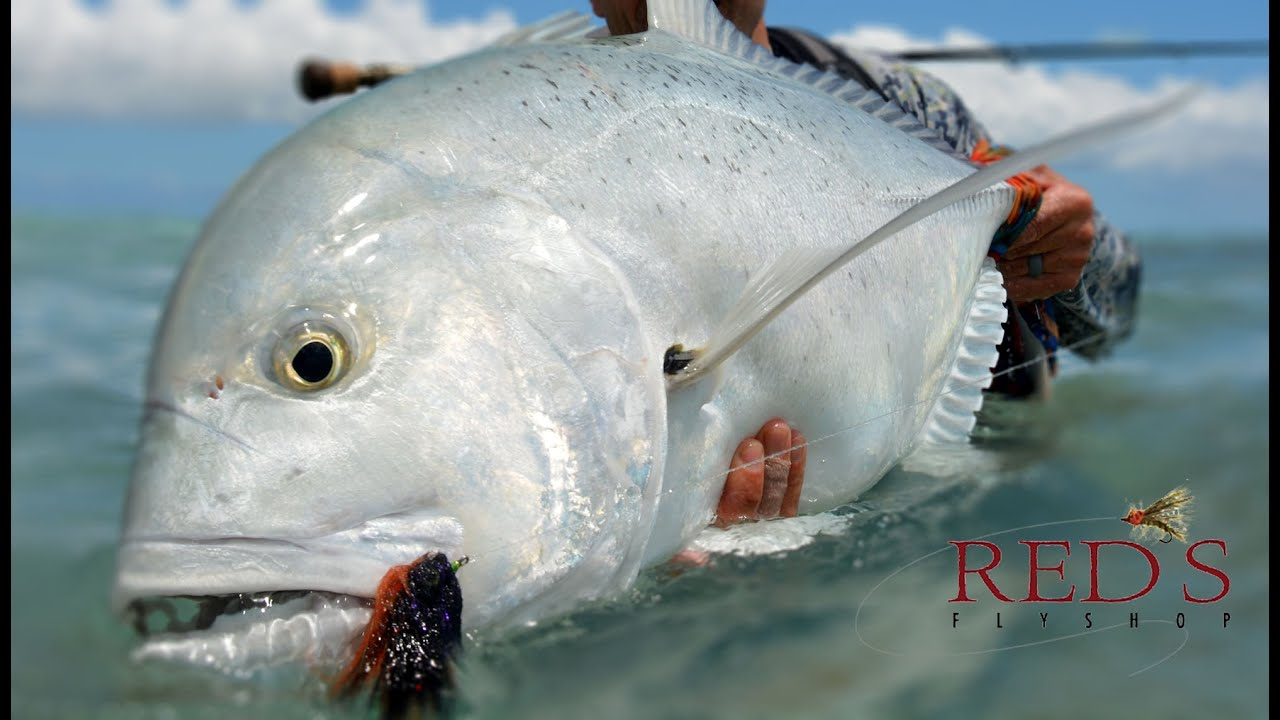Giant Trevally Fishing, Tips, and Gear for Christmas Island - YouTube