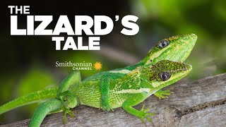 The Lizard's Tale 102: Does Evolution Repeat Itself?