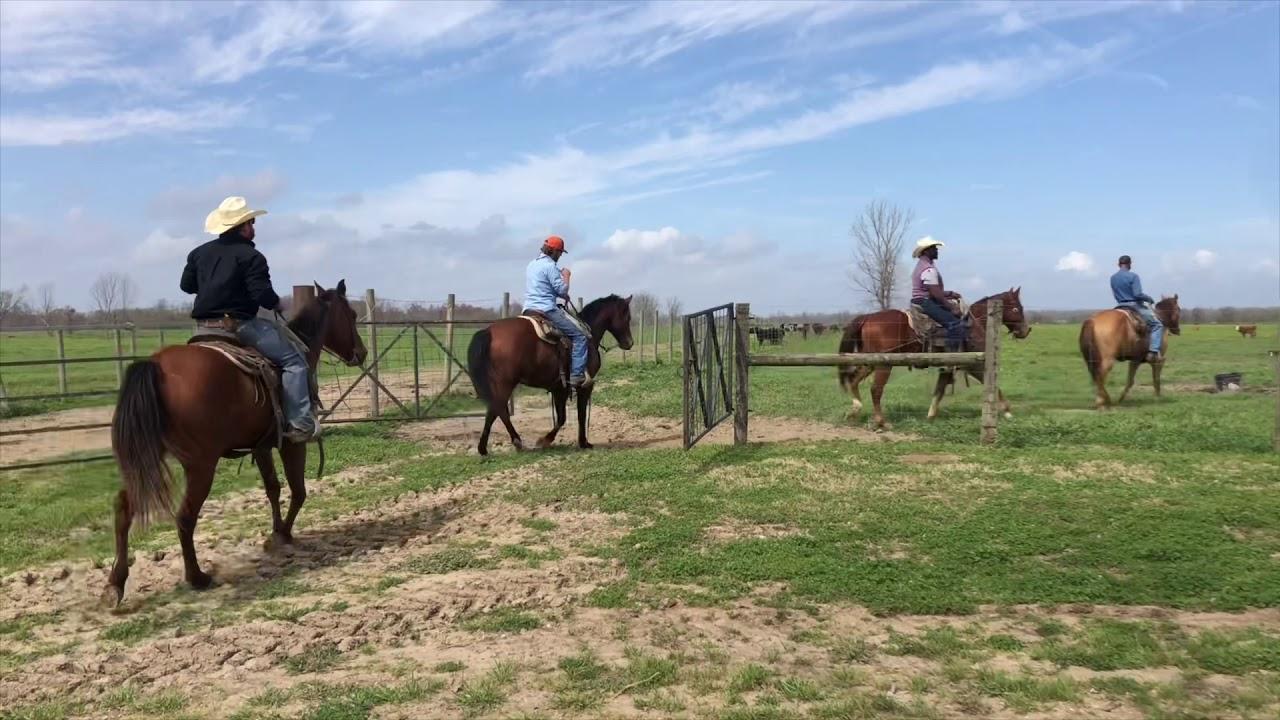 Angola Prison Ranch Horses
