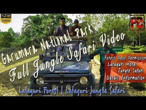 Gorumara National Park Full Jungle Safari 2019 | Gorumara Jungle Safari | Lataguri Forest | Dooars