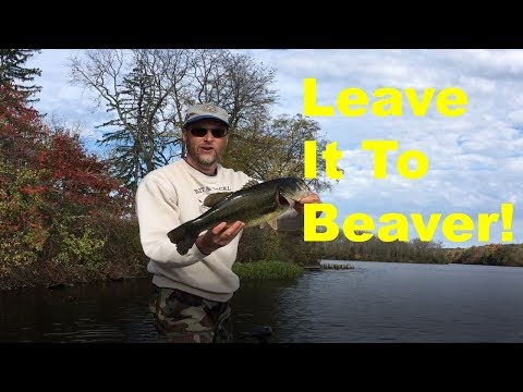 How To Fish The Sweet Beaver