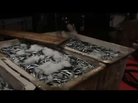 Ιταλοί επισκέπτες στα αλιευτικά ΓΡΙ ΓΡΙ  - πυροφάνια LED