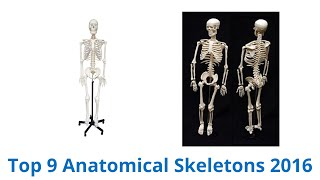 9 Best Anatomical Skeletons 2016