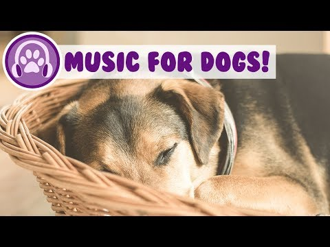 Music Therapy to Relax Your Anxious Dog! NEW 2018!
