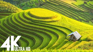 4K Video (Ultra HD) : Unbelievable Beauty - Relaxing Music Along With Beautiful Nature Videos #127