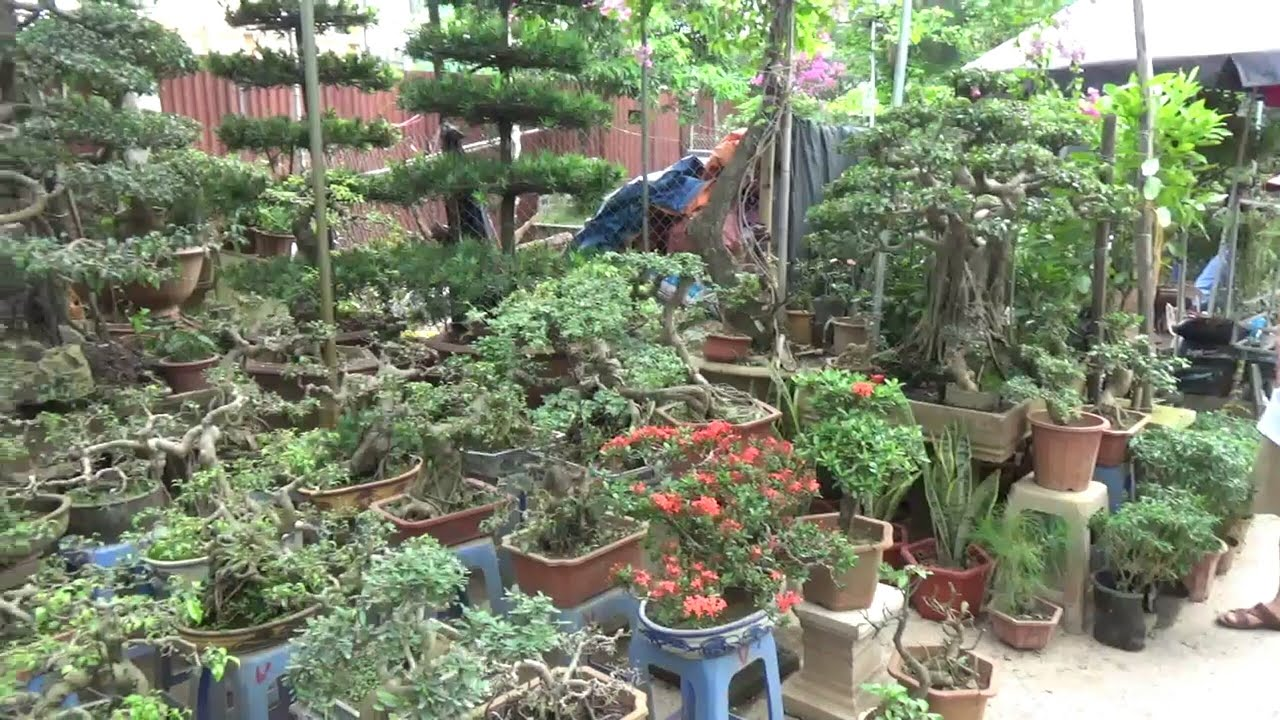 SH.1381.Ngạc nhiên với báo giá 200K cho nhiều cây cảnh tại nhà vườn chị ĐỗVững chợ Vạn Phúc.Hà Đông.