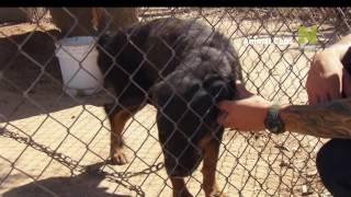 Служба охраны животных - промо передачи на Viasat Nature