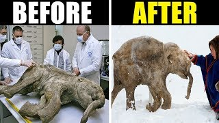 10 Extinct Animals Being Brought Back To Life